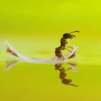 ant leaf boat