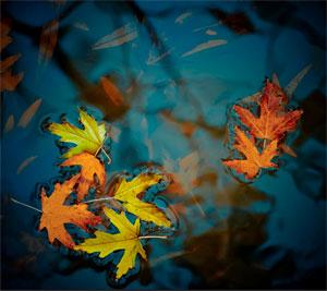 Leaf-on-Water
